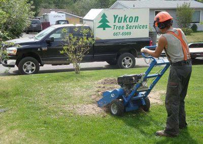 Stump removal – Riverdale, Whitehorse, YT