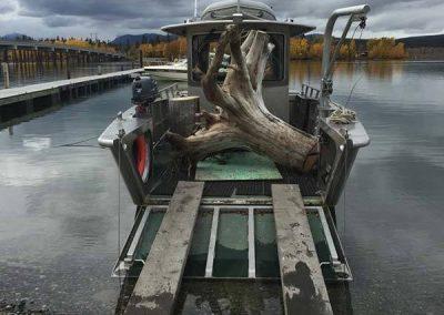 Stump salvage – Tagish, YT
