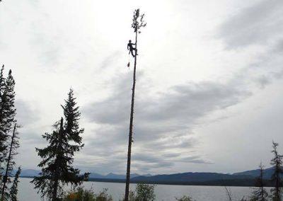 Tree removal – #1 Marsh Lake, YT