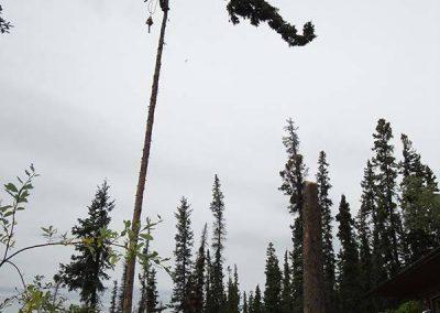 Tree removal – #3 Marsh Lake, YT