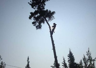Tree removal – Hydro line, Lake Laberge, YT